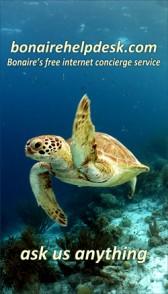 sidebar-ad-turtle
